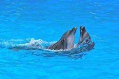 Paare der Delphine Stockfoto