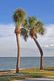 Paare der gekrümmten Palmen Stockfoto