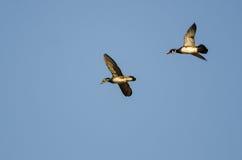 Paare der hölzernen Enten, die in einen blauen Himmel fliegen Lizenzfreies Stockbild