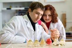 Paare der jungen Wissenschaftler lizenzfreies stockfoto