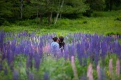 Paare in der Liebe, die in den Lupine-Blumen umfaßt Stockfotografie