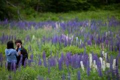 Paare in der Liebe, die in den Lupine-Blumen umfaßt Lizenzfreie Stockbilder