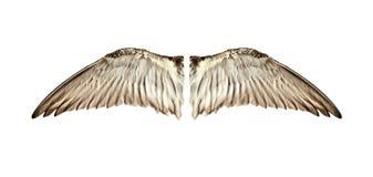 Paare der natürlichen Vogelflügel aus Ansicht heraus Lizenzfreies Stockbild