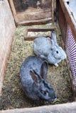 Paare der netten Kaninchen hinter einer Stange Stockfotos