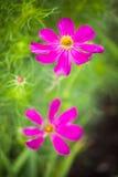 Paare der rosa Blumen Stockbilder