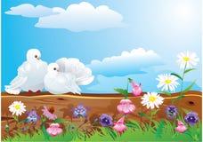 Paare der weißen Tauben Lizenzfreies Stockbild
