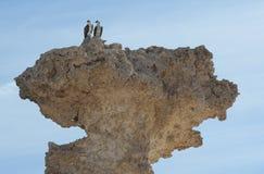 Paare der wilden Ospreys hockten auf einem Felsen Lizenzfreie Stockfotografie