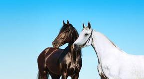 Paare des Schwarzweiss-Pferdeportraits auf einem Hintergrund des blauen Himmels Lizenzfreie Stockbilder