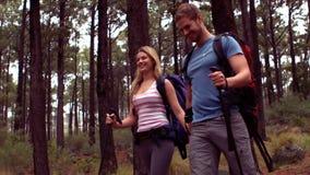 Paare, die durch einen Wald wandern stock video