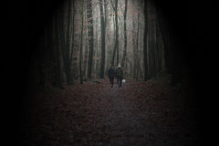 Paare, die in einen dunklen Wald gehen Stockbild
