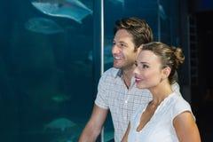 Paare, die Fische im Behälter betrachten Stockbilder