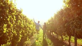 Paare, die Hand in Hand zwischen Weinstock gehen stock video