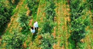 Paare, die im grünen Bauernhof 4k bewirtschaften stock footage