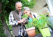 Paare, die zusammen im Garten arbeiten Stockbilder
