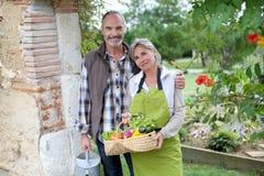 Paare, die zusammen am sonnigen Tag im Garten arbeiten Stockbilder