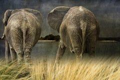 Paare Elefanten im Regen, kreative Zusammensetzung Lizenzfreies Stockfoto