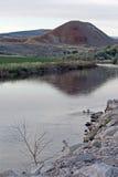 Paare Enten, die im Bighorn River nahe Thermopolis Wyoming schwimmen Stockfotografie