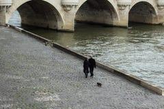 Paare gehen ihr Hund entlang einem Fluss Lizenzfreie Stockfotografie