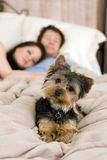 Paare im Bett lizenzfreies stockfoto