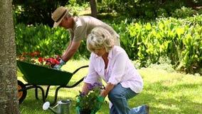 Paare im Ruhestand, die zusammen im Garten arbeiten stock footage