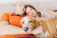 Paare mit einem Hund Stockfotos