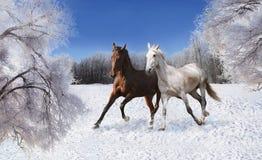 Paare Pferde, die durch den Schnee galoppieren Lizenzfreies Stockfoto
