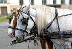 Paare Pferde im Geschirr stockfotografie