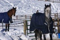 Paare Pferde mit Decken Lizenzfreies Stockbild