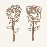 Paare Rosen Hand gezeichnete Rosen Dunkelbrauner Entwurf Stockbild