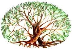 Paare von Bäumen Lizenzfreie Stockfotos