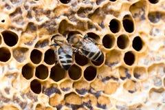 Paare von Bienen stockbild