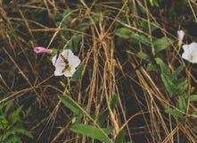 Paare von Bienen auf der Blume Stockbild