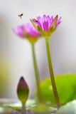 Paare von Bienen in der Natur unter den Lilien Lizenzfreie Stockbilder