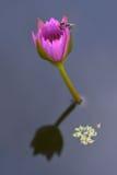 Paare von Bienen in der Natur unter den Lilien Lizenzfreies Stockfoto