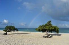 Paare von Divi Divi Trees auf Eagle Beach in Aruba Lizenzfreies Stockfoto