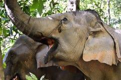 Paare von Elefanten, Junge und Erwachsener, am Nationalpark Stockfotos