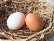 Paare von Hühnereien und von Enteneiern Stockfoto