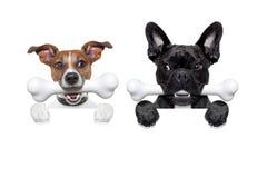 Paare von Hunden mit den Knochen Stockfotografie