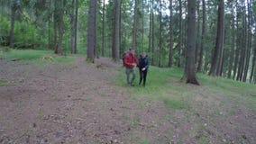 Paare von jugendlich reizenden Wanderern mit den Rucksäcken, die in den Forstbetriebhänden wandern - stock video