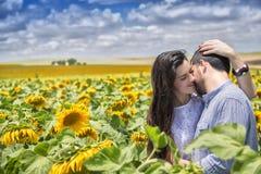 Paare von Liebhabern auf dem Gebiet von Sonnenblumen Stockfotografie