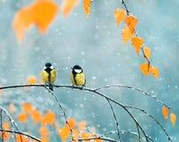 Paare von netten Vögel Meisen im Park, der auf einer Niederlassung unter sitzt stockfotos