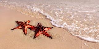 Paare von Starfish Lizenzfreies Stockbild