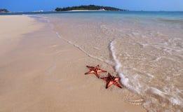 Paare von Starfish Lizenzfreies Stockfoto