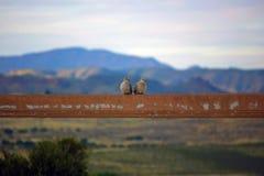 Paare von Vögeln Lizenzfreies Stockfoto