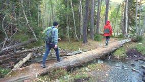 Paare von Wanderern in den Waldtouristen Frau und im Mann еourists gehen in den wilden Wald stock video