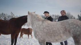Paargangen met paarden en poneys in openlucht op een boerderij in de winter Een kerel en meisje het strijken paarden stock footage