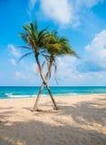 Paarkokosnuss-Palme auf Strand Stockbilder