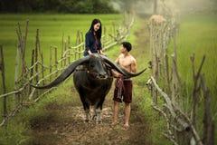 Paarliebhaber und ein Büffel Stockfotos