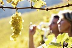 Paarprobierenwein im Weinberg lizenzfreies stockfoto