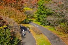 Paarreitfahrrad im Herbstfarbpark Lizenzfreies Stockfoto